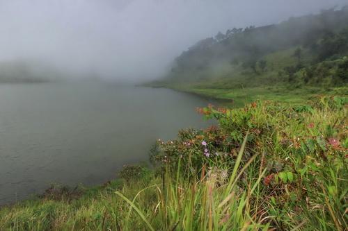 Tanaman dringo yang tumbuh alami di pinggiran telaga