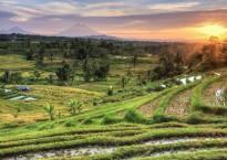 Jatiluwih Rice Fields Sunrise