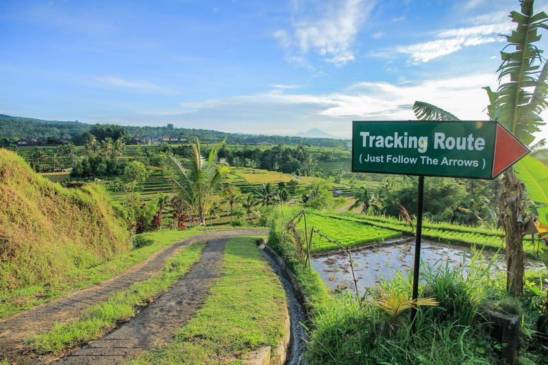 Jalur Tracking Jatiluwih